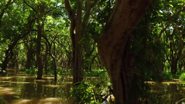 cambodian mangrove forest by boat - cambodia stock videos and b-roll footage