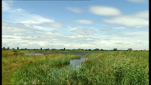 cambridgeshire the fens ext shots of hobby bird in flight and dragonfly amongst reeds general views wetlands area fen with sand and gravel quarry... - fen stock videos and b-roll footage