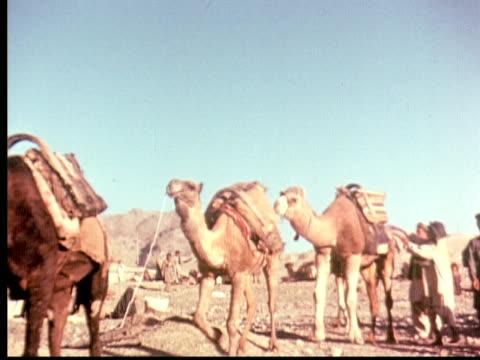 1960 MONTAGE Camel caravan. Boys lead camels. Camel pulling cart through city street loaded with sacs / Pakistan