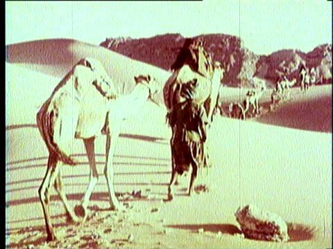 1965 reenactment montage camel caravan crossing desert and arabic street market scene / middle east - market reenactment stock videos & royalty-free footage