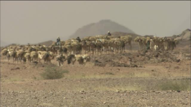 camel caravan in sahara desert - convoy stock videos & royalty-free footage