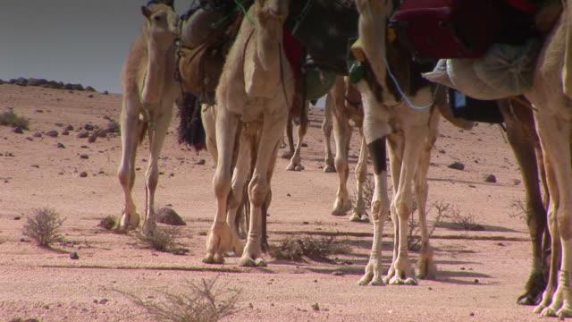 kamel karawane in der wüste - huf stock-videos und b-roll-filmmaterial