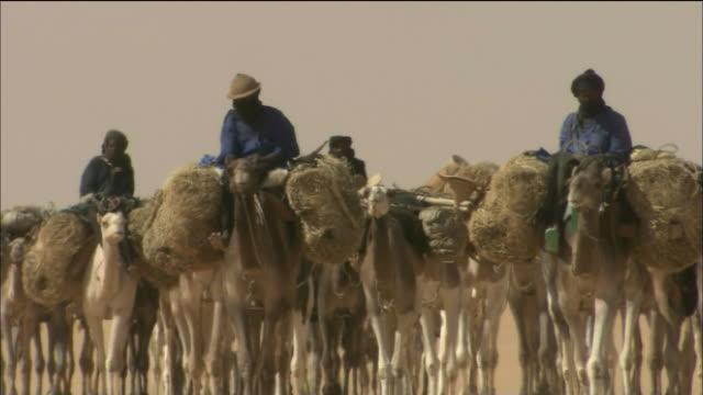 Camel Caravan Train In Sahara Desert