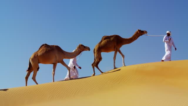 camel caravan train travelling across middle eastern desert - qatar stock videos & royalty-free footage