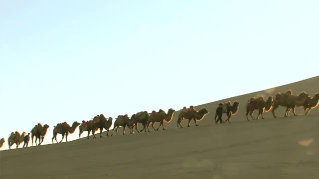 stockvideo's en b-roll-footage met camel caravan - egyptische cultuur
