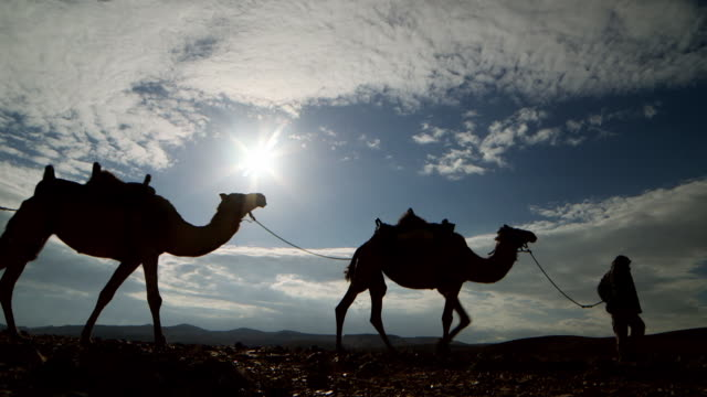 WS Camel driver with his three camels moving in desert area