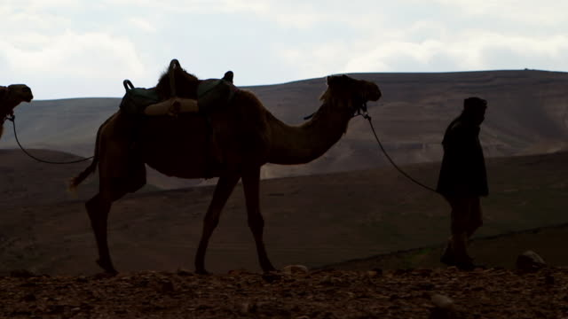 WS POV Camel driver with his two camels moving in desert area / Israel