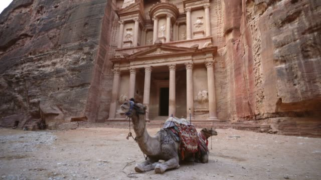 camel infront of al-khazneh in petra - camel stock videos & royalty-free footage