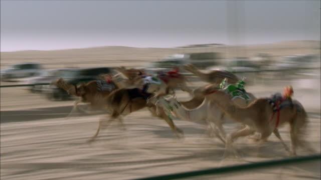 camel racing in saudi arabia 02 - camel stock videos & royalty-free footage