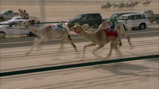 camel racing in saudi arabia 03 - saudi arabia stock videos and b-roll footage