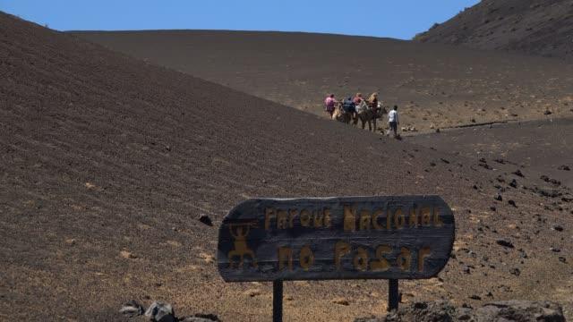 camel ride in timanfaya national park, lanzarote, canary islands, spain, atlantic, europe - atlantic islands stock videos and b-roll footage
