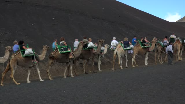 camel ride in timanfaya national park, lanzarote, canary islands, spain, atlantic, europe - atlantic islands stock videos & royalty-free footage