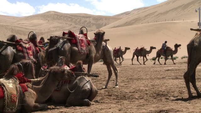 camel rides at the edge of the gobi desert - convoy stock videos and b-roll footage