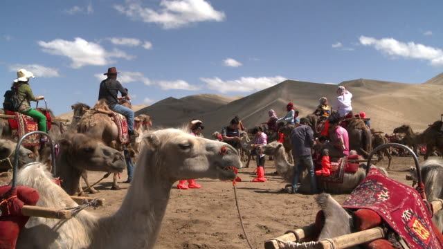 camel rides at the edge of the gobi desert - camel train stock videos & royalty-free footage