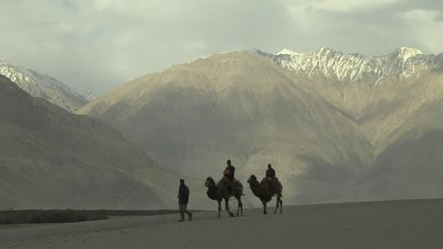 camel safari nubra valley leh jammu and kashmir india - safari india stock videos and b-roll footage