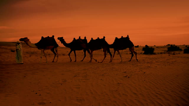 camel train and herder in desert sunrise - camel stock videos & royalty-free footage