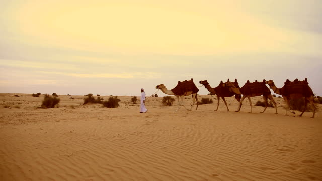 camel train and herder in desert sunrise - middle east stock videos & royalty-free footage