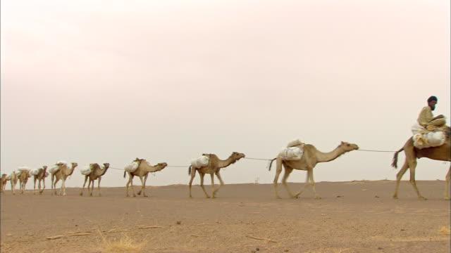 Camel train at Sahara Desert