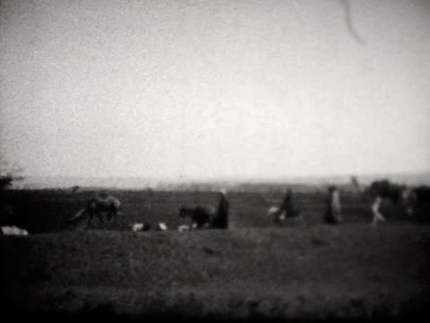 1929 camel train in egypt - black and white stock videos & royalty-free footage