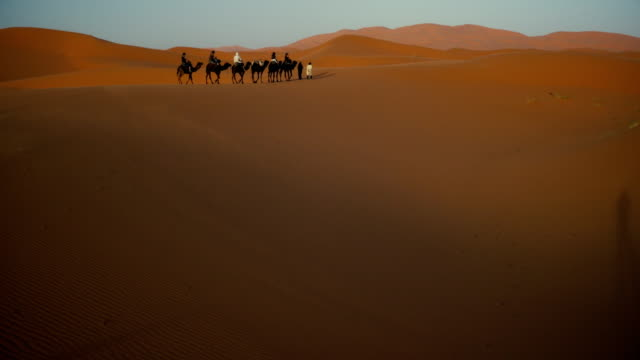 camel train in sahara desert at sunset - camel train stock videos & royalty-free footage