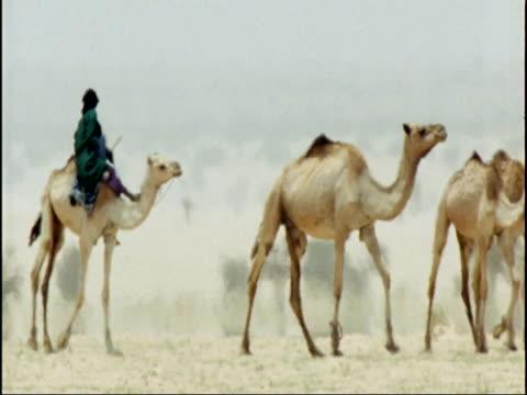 stockvideo's en b-roll-footage met camel train in sahara desert, niger - werkdier