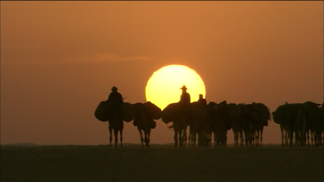 camel train in tenere desert - camel train stock videos & royalty-free footage