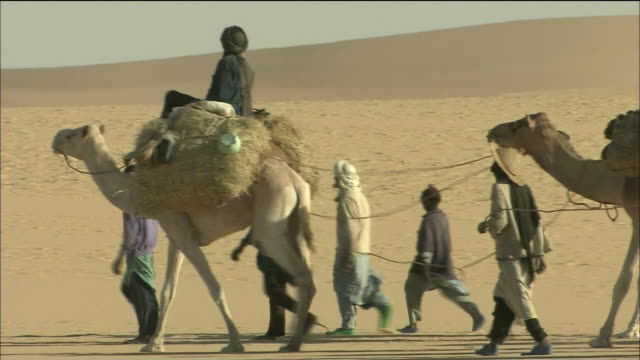 camel train in tenere desert - convoy stock videos and b-roll footage