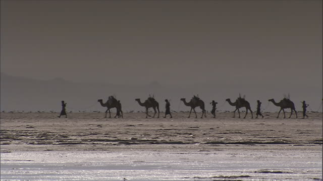 ws pan camel train on salt flat / republic of djibouti - camel train stock videos & royalty-free footage