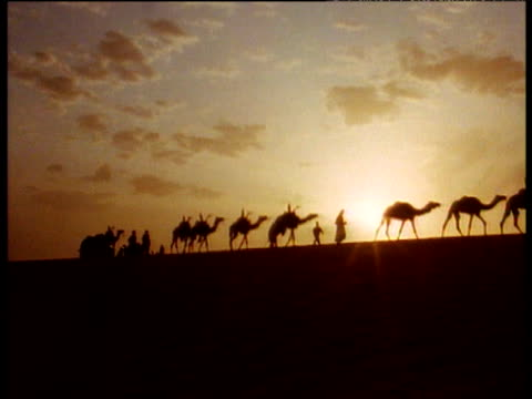 vídeos y material grabado en eventos de stock de camel train traveling through desert includes sunset silhouettes and close up feet and legs moving through sand. - parte del cuerpo animal
