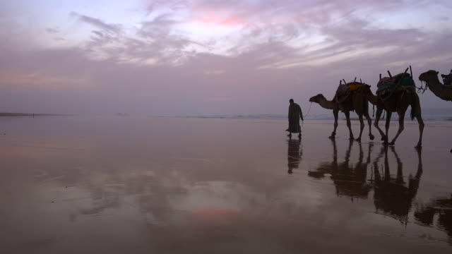 vídeos de stock, filmes e b-roll de a camel train travels along the beach - áfrica do norte