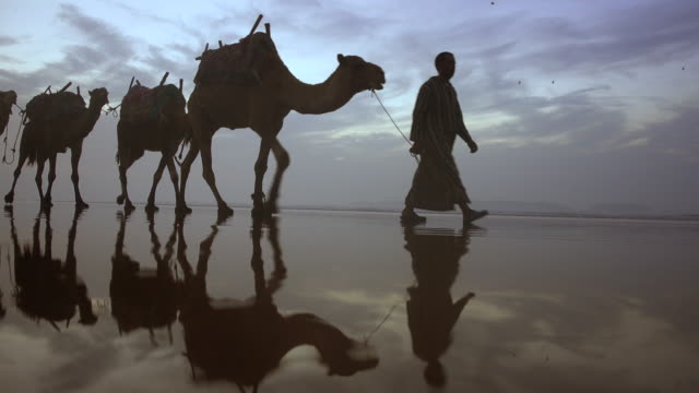 A camel train travels along the beach