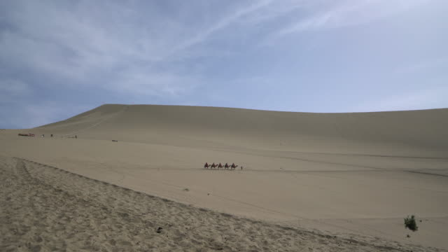 camel train walking on gobi desert - camel train stock videos & royalty-free footage