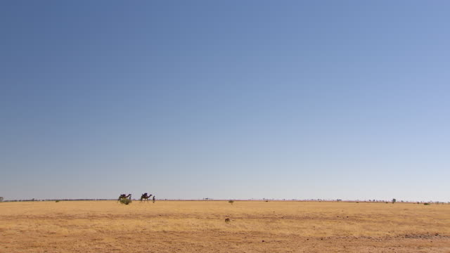WS Camel train walking on landscape/ Boulia, Queensland, Australia