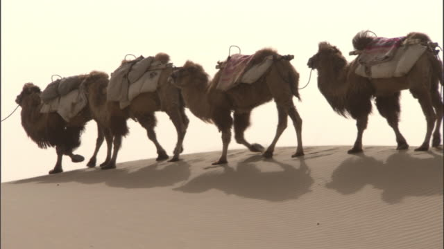 Camel train walks over dunes, Taklamakan,