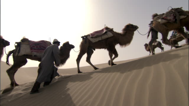 camel train walks over dunes, taklamakan, - camel stock videos & royalty-free footage