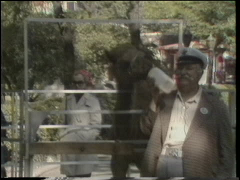camel trainer frank inn feeds valentine, a camel at central park zoo. - セントラルパーク動物園点の映像素材/bロール