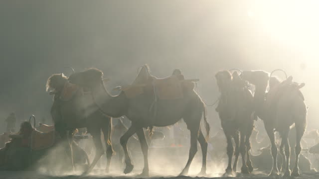 camel trains resting on gobi desert - camel stock videos & royalty-free footage