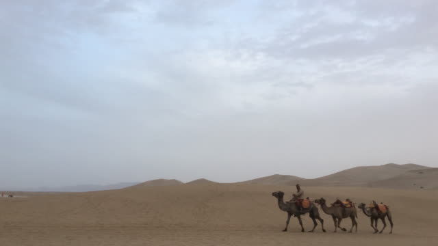 camel trains walking on gobi desert - herding stock videos & royalty-free footage