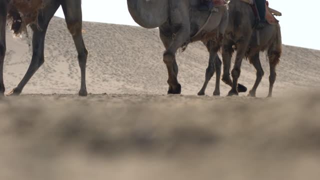 camel trains walking on gobi desert - camel stock videos & royalty-free footage