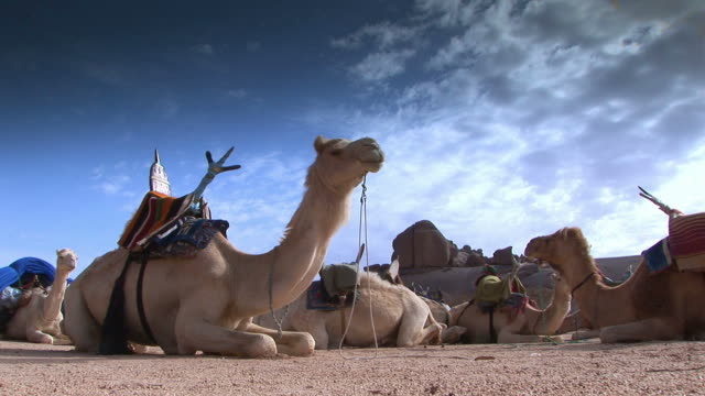 camel - desert oasis stock videos & royalty-free footage