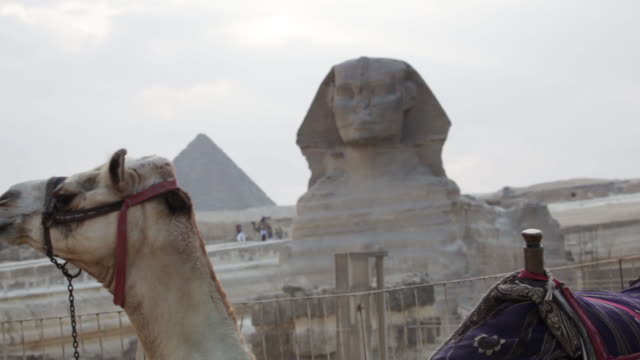 Camel with the Great Sphinx of Giza and pyramid in background