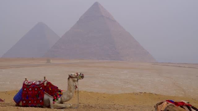 kamele und pyramiden von gizeh in ägypten. - pyramide bauwerk stock-videos und b-roll-filmmaterial