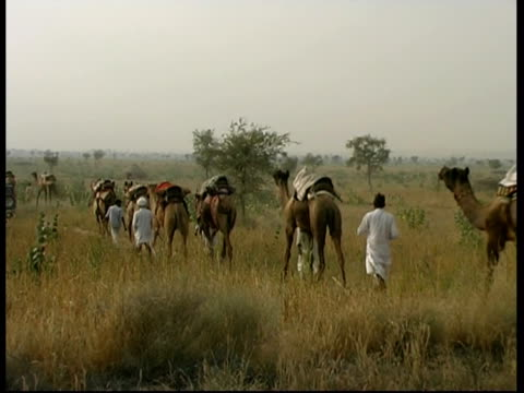 vidéos et rushes de ms camels and riders in the desert, rajasthan, india - animaux au travail