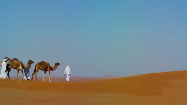 camels being led handlers across desert sand dunes - 熱さ点の映像素材/bロール
