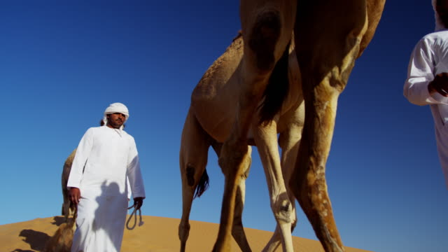 camels being led handlers across desert sand dunes - camel train stock videos & royalty-free footage