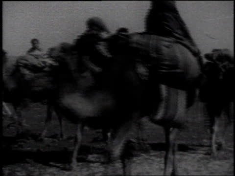 1936 montage camels carry large loads on their backs and pulling carts - 牛車点の映像素材/bロール