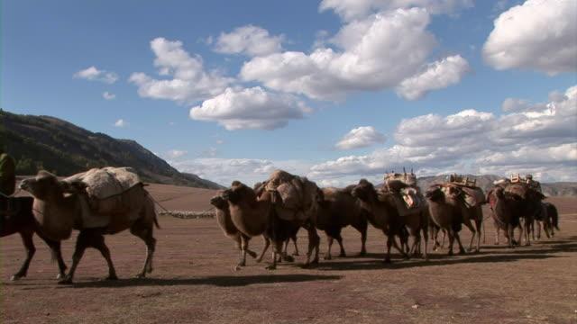 vídeos de stock, filmes e b-roll de camels carrying baggage in xinjiang, china - montar um animal