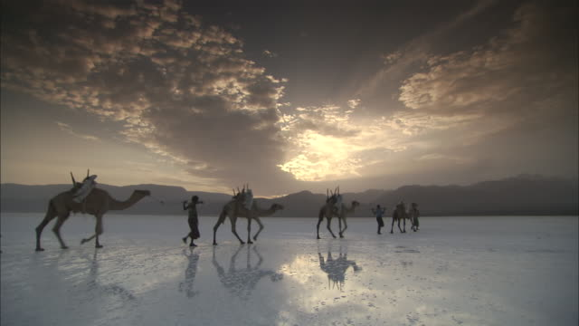 ws camels goes away over shiny salt flat surface / / republic of djibouti - camel train stock videos & royalty-free footage