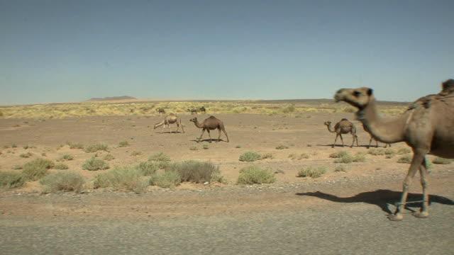 vídeos y material grabado en eventos de stock de ws side pov camels in desert, merzouga, morocco - diez segundos o más