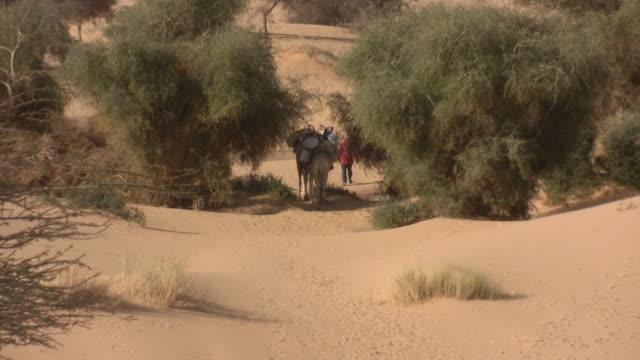 ws zo camels in sahara desert crossing oasis / chinghetti, adrar, mauritania - モーリタニア点の映像素材/bロール